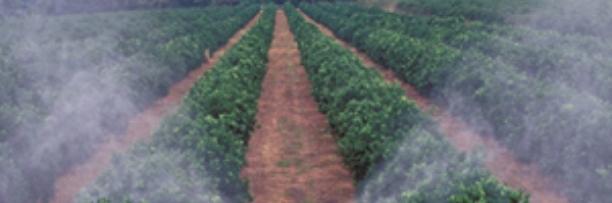 fertilizantes.jpg