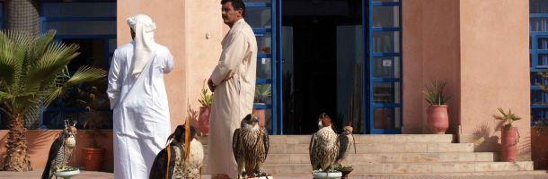 qatar_bird_hunt1_610.jpg