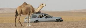tn_camel_b.jpg