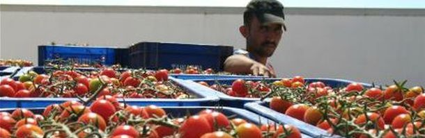 e8aeeu-morocco-tomatoes.jpg